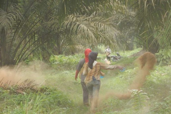 The Lack of Welfare Protection for Palm Oil Industry Labors